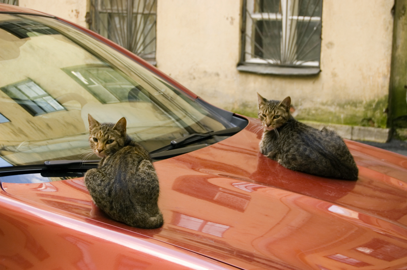 Оборачиваюсь, а там коты...