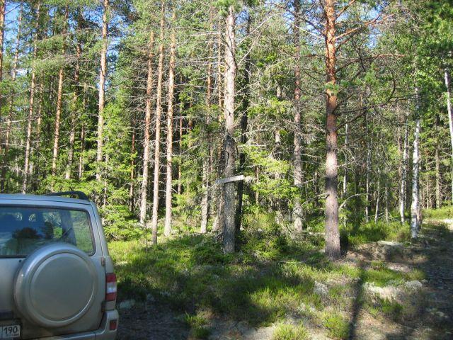 Указатель в лесу. Если фотку увеличить,  то можно узнать куда приведёт дорога!