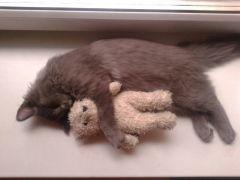 Кузя спит