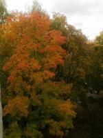 Из окна1.jpg